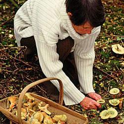 03 cules-ciuperci