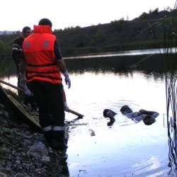 mort lac petrila
