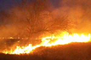Val de incendii de vegetaţie uscată în judeţ